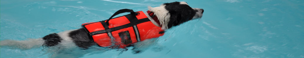 Collie cross Murphy swimming in The Wickham Canine Rehabilitation hydrotherapy pool