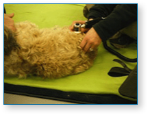 Hampshire Canine Physio Clinic treatment image 1