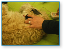Hampshire Canine Physio Clinic treatment image 3